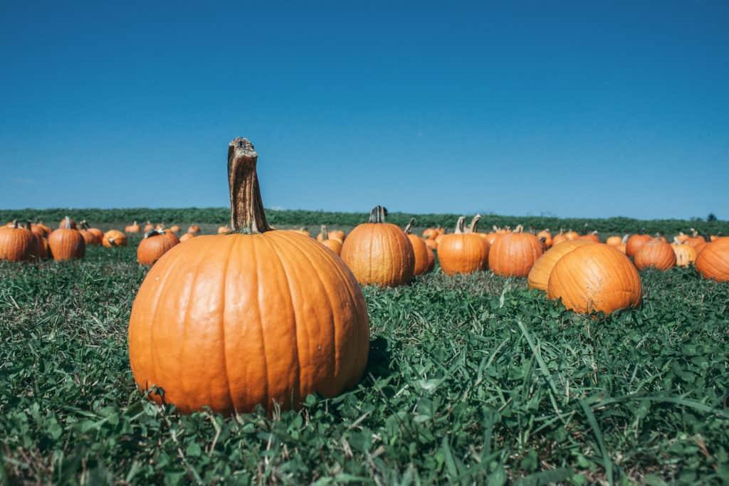 Fall Festivals Near Me: Janoski's hosts its Pumpkinland every year.