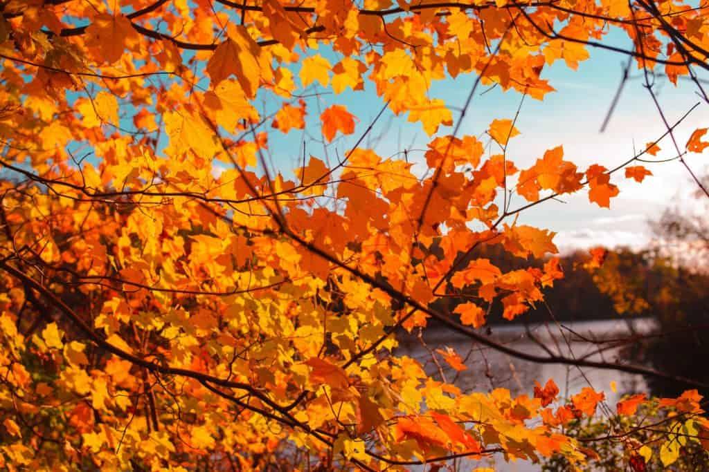 Where to see Pennsylvania Fall Foliage 2020.