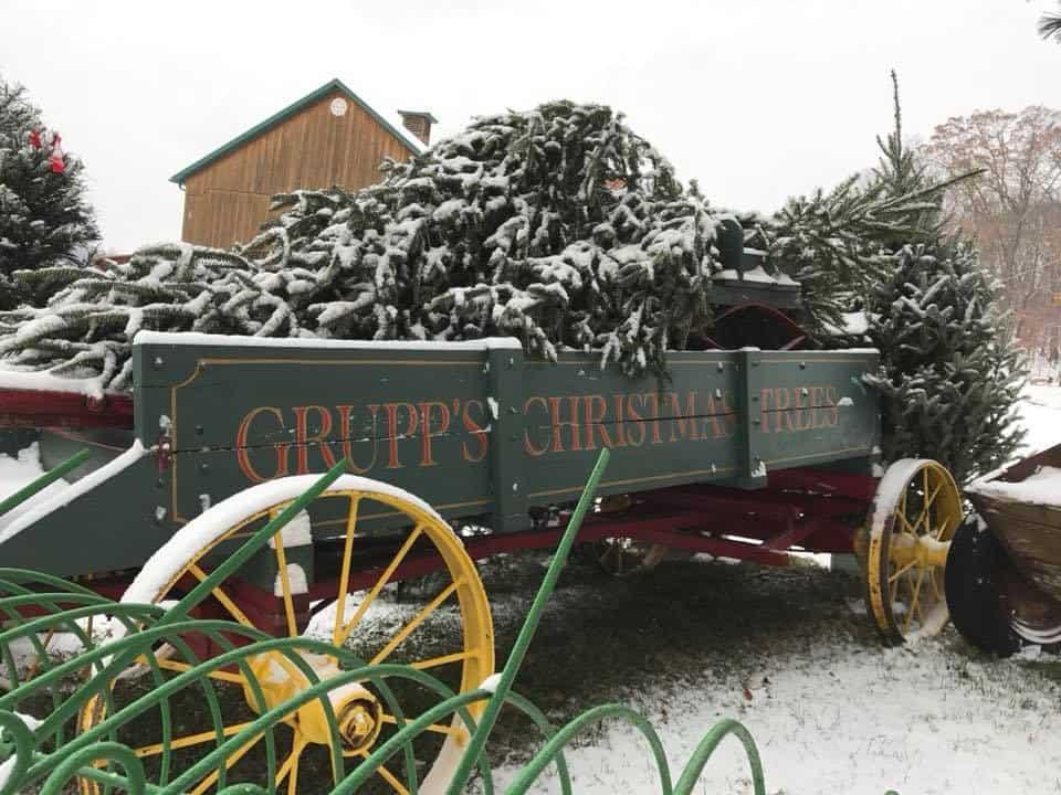 Christmas Tree Farms Near Me: Grupps Christmas Trees in Harmony, PA