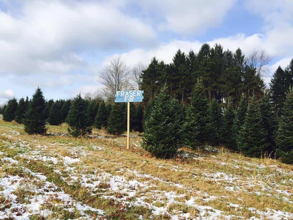 Christmas Tree Farms Near Me: Hozak Farms in Clinton, PA