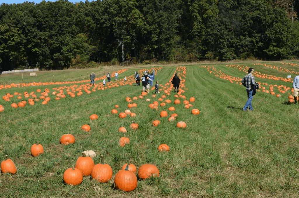 Fall Festivals Near Me: Freedom Farms hosts Fall Festival weekends every year.